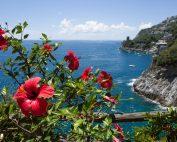 Villa la Madonnina: outside view with flowers